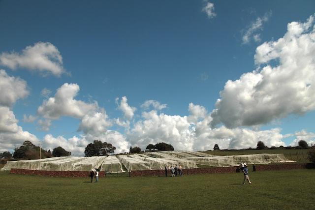 3-Willows Vineyard Wall (7)
