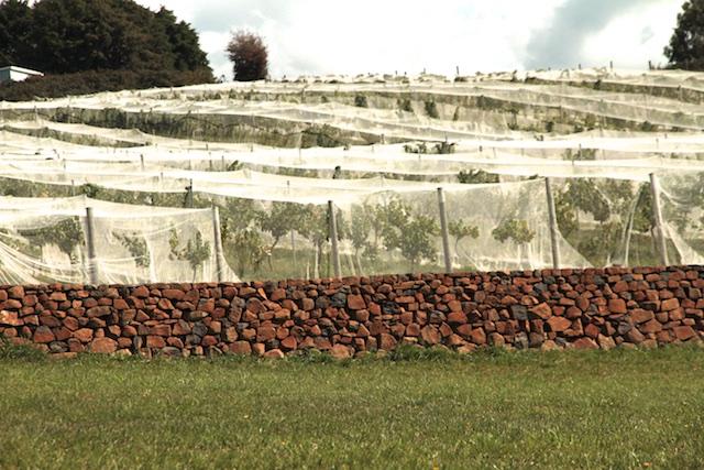 3-Willows Vineyard Wall (8)