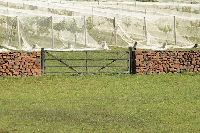 3-Willows Vineyard Wall