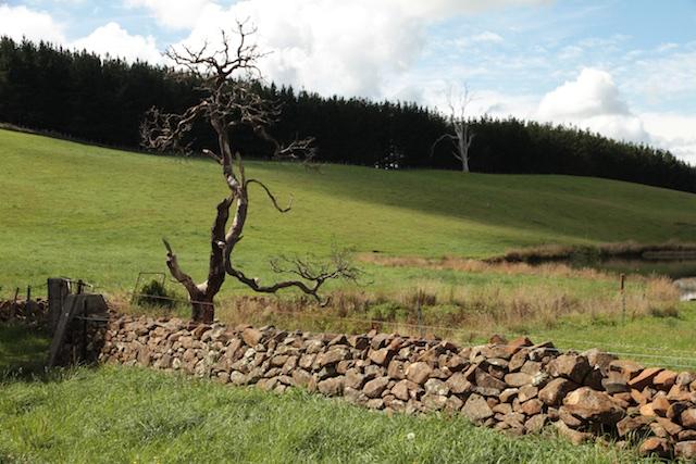 Bonney's Farm, Deloraine, wallers- Chipper Lovegrove, Vic Cohen & Jim Bonney (10)