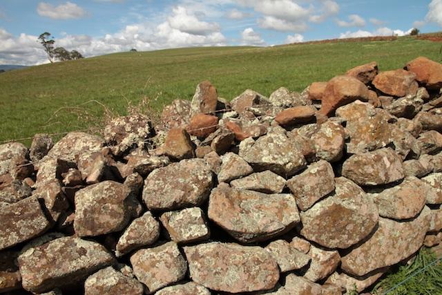 Bonney's Farm, Deloraine, wallers- Chipper Lovegrove, Vic Cohen & Jim Bonney (3)
