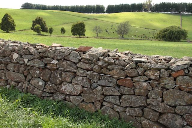 Bonney's Farm, Deloraine, wallers- Chipper Lovegrove, Vic Cohen & Jim Bonney (5)