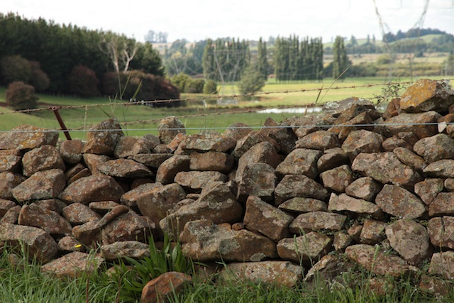 Bonney's Farm, Deloraine, wallers- Chipper Lovegrove, Vic Cohen & Jim Bonney (7)